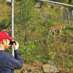 Johan taking pics of Tiger