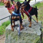 Three minpins on a rock